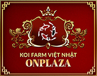 nonbo.net.vn