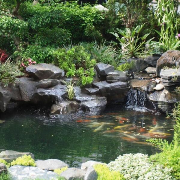 Tiểu cảnh thác nước kết hợp bể cá
