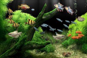 Nên chọn các loại cá cảnh dễ nuôi, sống lâu để không mất quá nhiều công sức chăm sóc