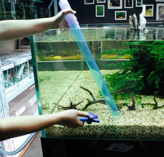 Thay nước cho bể cá