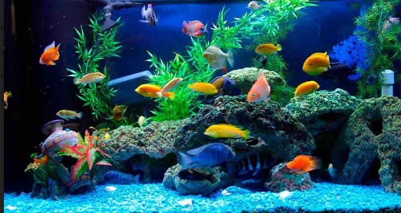 Bể cá cảnh mang đến nhiều ý nghĩa phong thủy cho cuộc sống