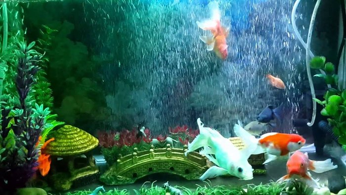Chọn loại cá cảnh phù hợp với vị trí đặt bể cá cảnh