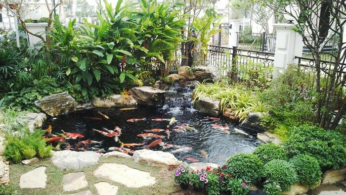 hồ cá koi mini sân vườn 01