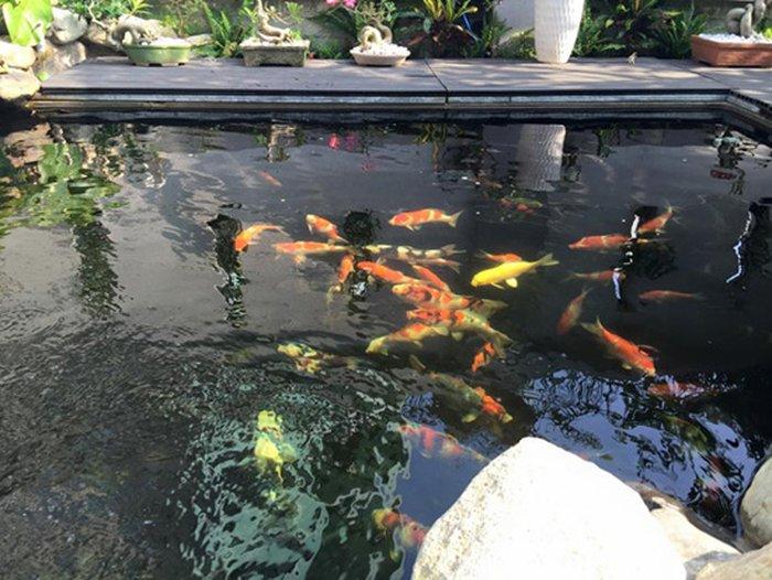 hồ cá koi mini sân vườn 02