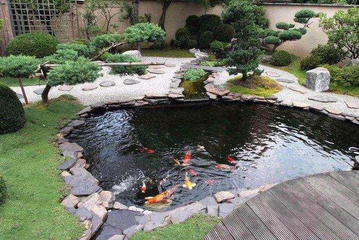 hồ cá koi mini sân vườn 03