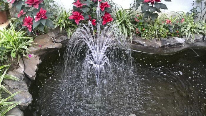 hồ cá koi mini sân vườn 04
