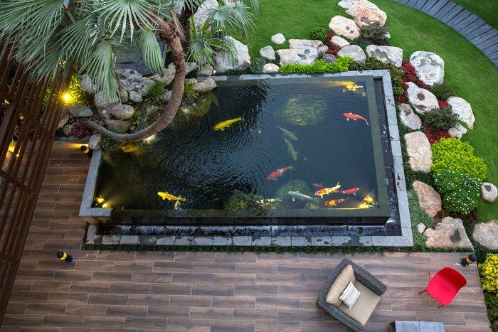 hồ cá koi sân thượng 3