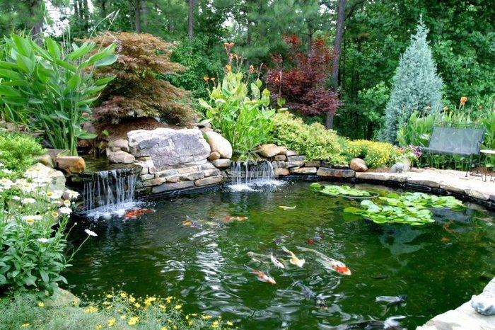 hồ cá koi sân vườn 2