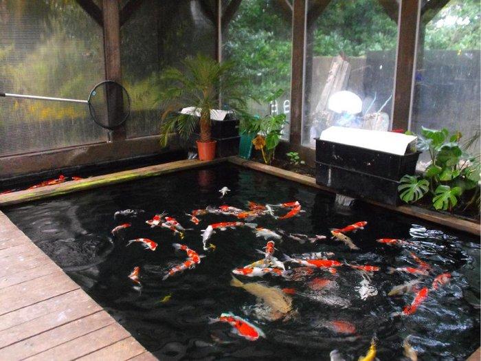 hồ cá koi trong nhà 3