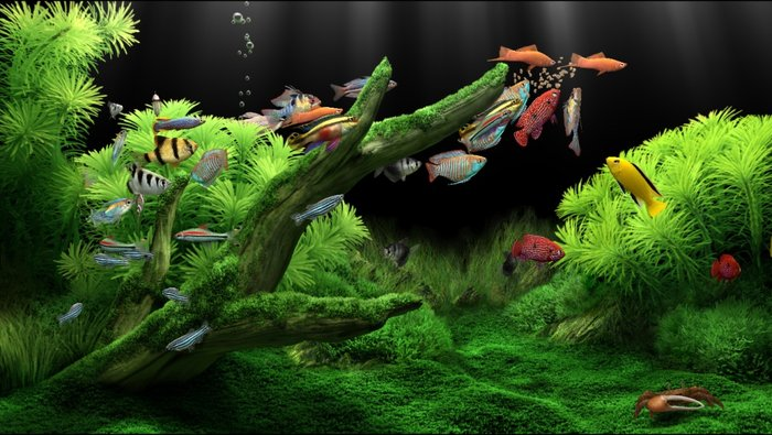 theo phong thủy số lượng cá cảnh trong bể tốt nhất là bội số của 9