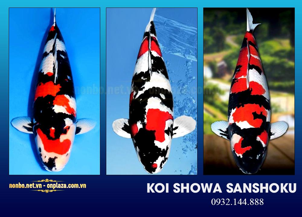 Cá koi Showa