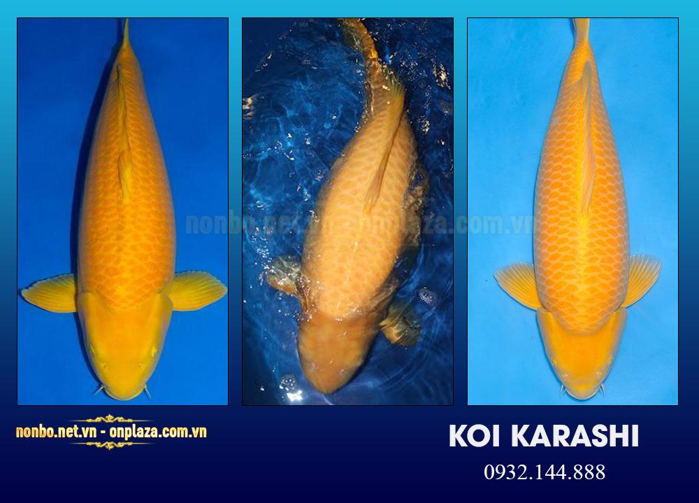 Cá Koi Karashi