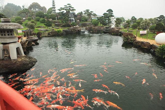 Hồ cá Koi có tiếng thức nước chảy
