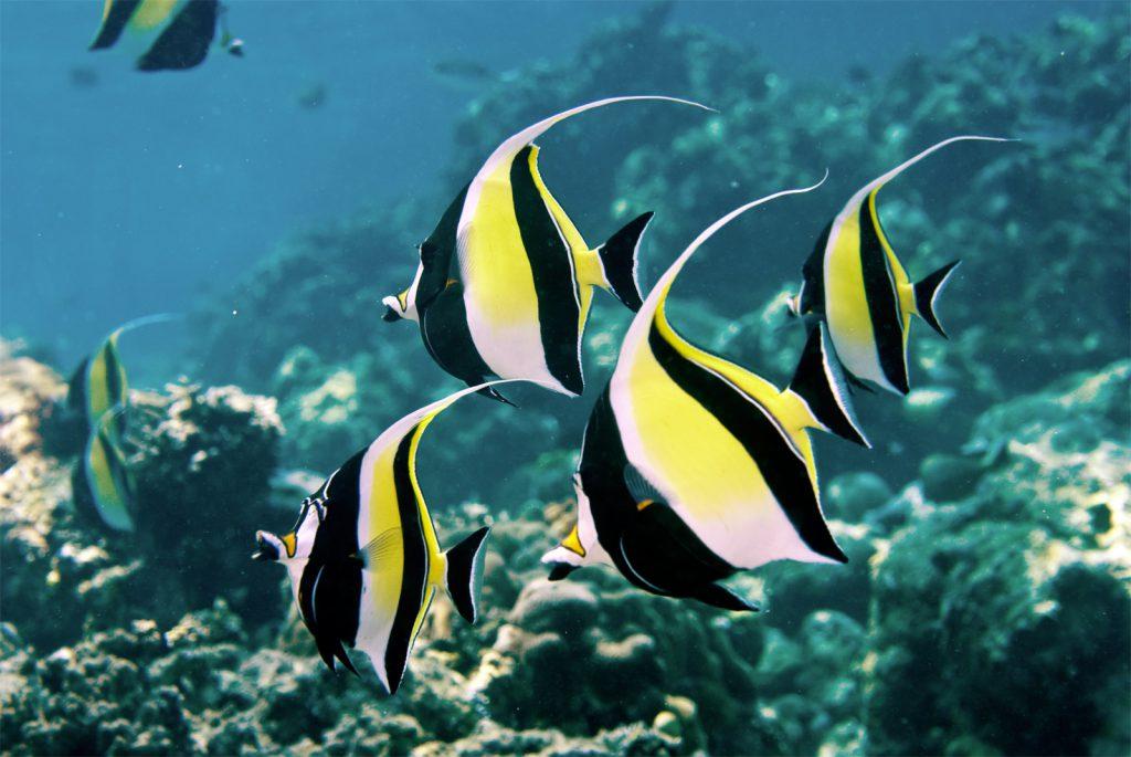 Các loài cá có tập tính bầy đàn có kích thước từ nhỏ đến lớn có thể chung sống với nhau.