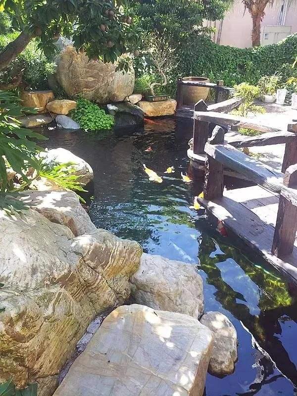 hồ cá koi sân vườn dọc theo hành lang