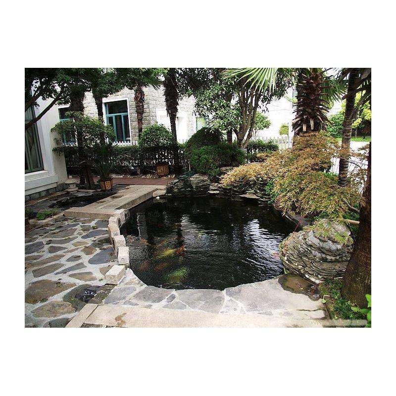 mẫu hồ cá koi sân vườn sau nhà đẹp