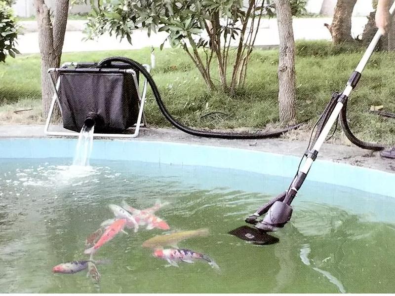 Hướng dẫn vệ sinh hồ cá koi