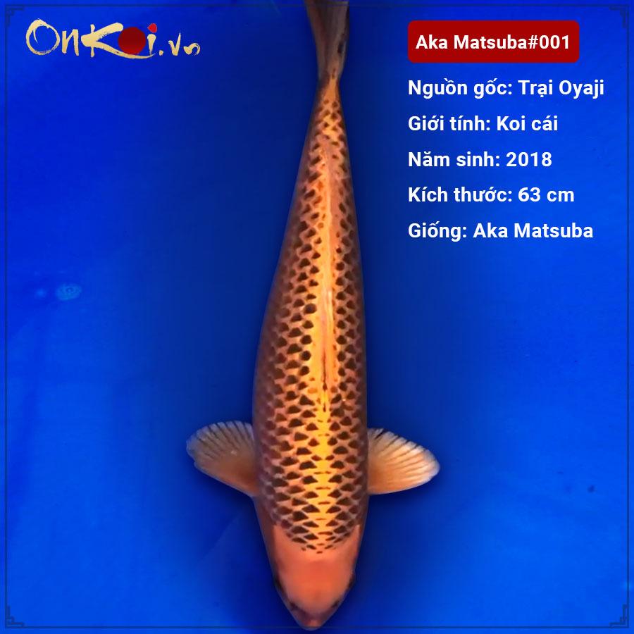 Nguồn gốc của cá Koi Matsuba