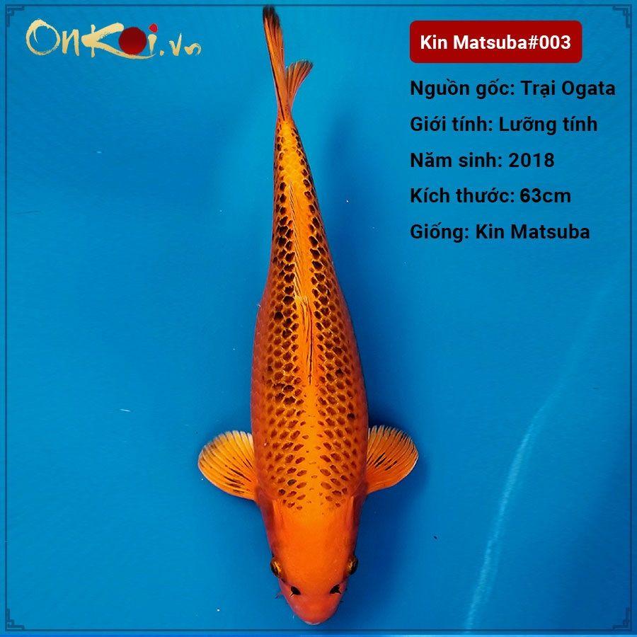 Đặc điểm của cá Koi Matsuba