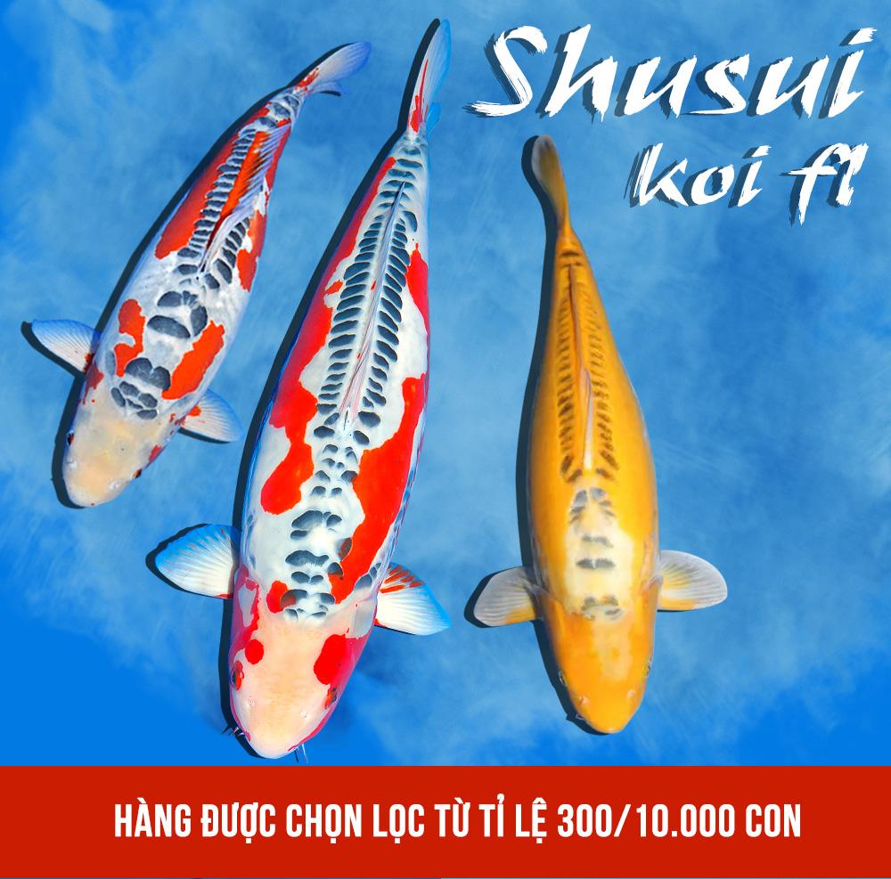 Koi Shusui: